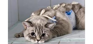Влажный корм для кастрированных котов