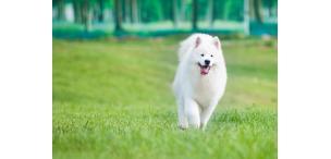 Корм для собак премиум класса