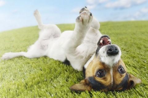отзывы о корме для собак